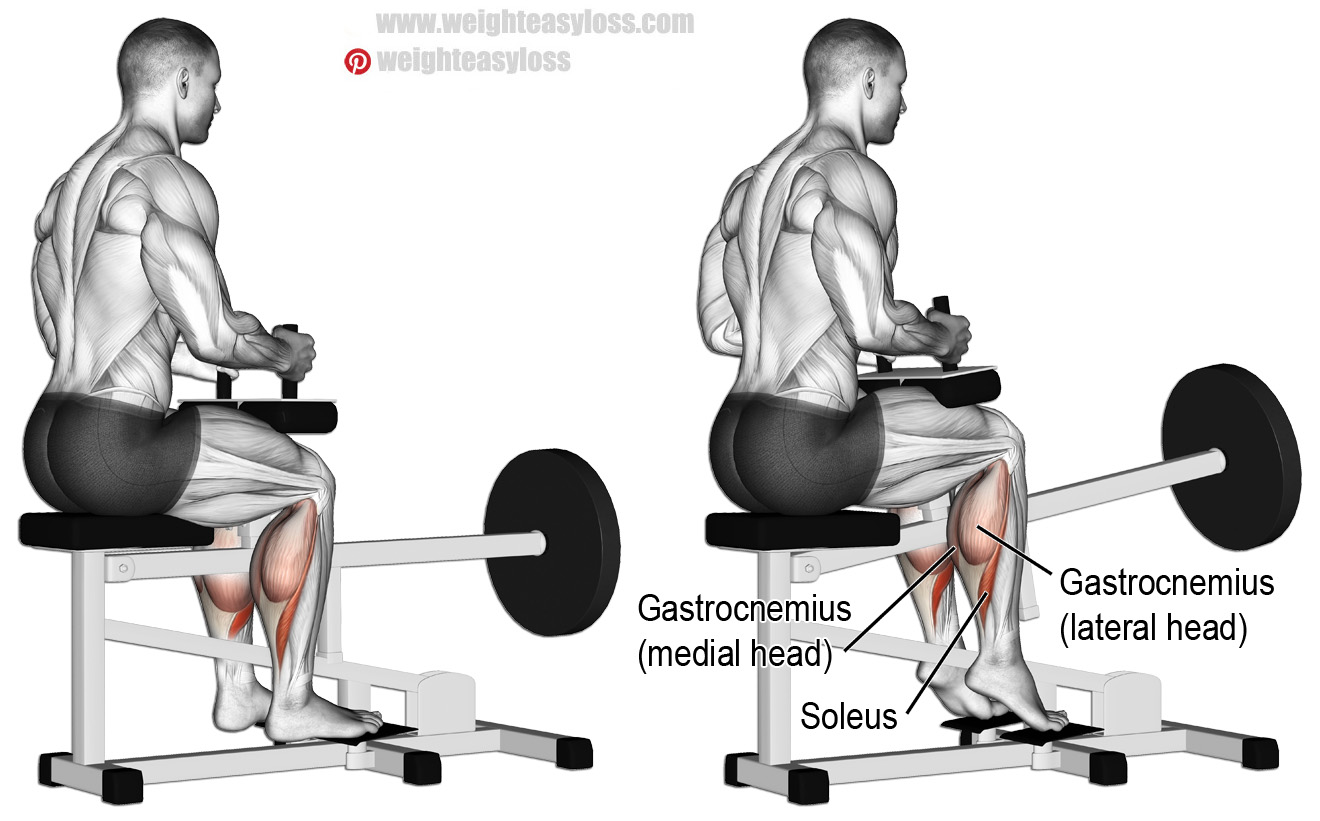 HOW TO SEATED CALVE RAISES