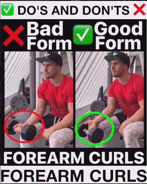 Forearm Curls Proper Form