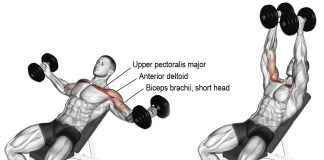 Executing Dumbbell Flyes