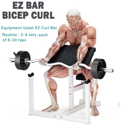 Howw to Do Biceps curl the scott bench