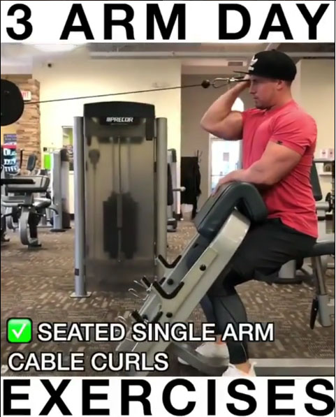 Seated Single Arm Cable Curl