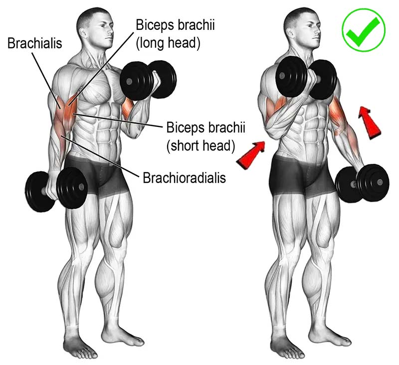 Neutral Angle Bicep Curl