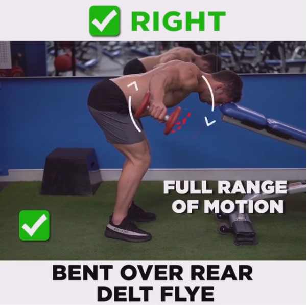 How to Bent Over Rear Delt Flye