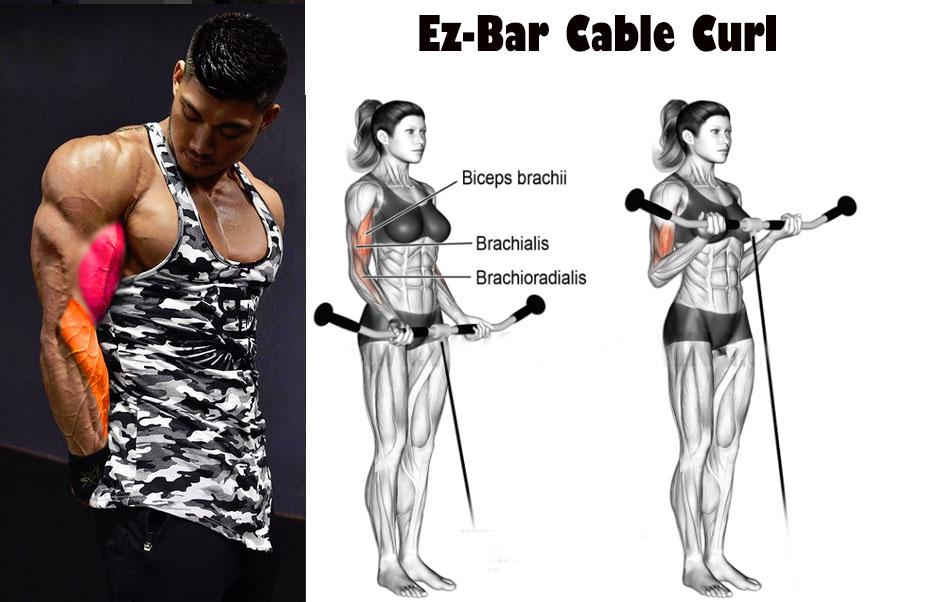 Ez-Bar Cable Curl