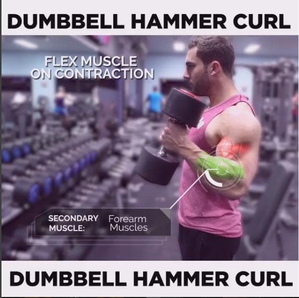 DUMBBELL HAMMER CURL