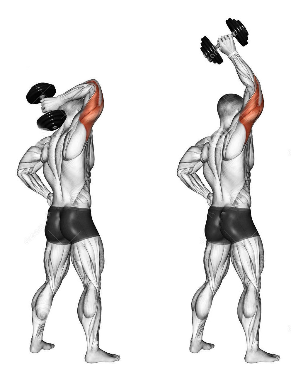 OVERHEAD DB TRICEP EXTENSIONS