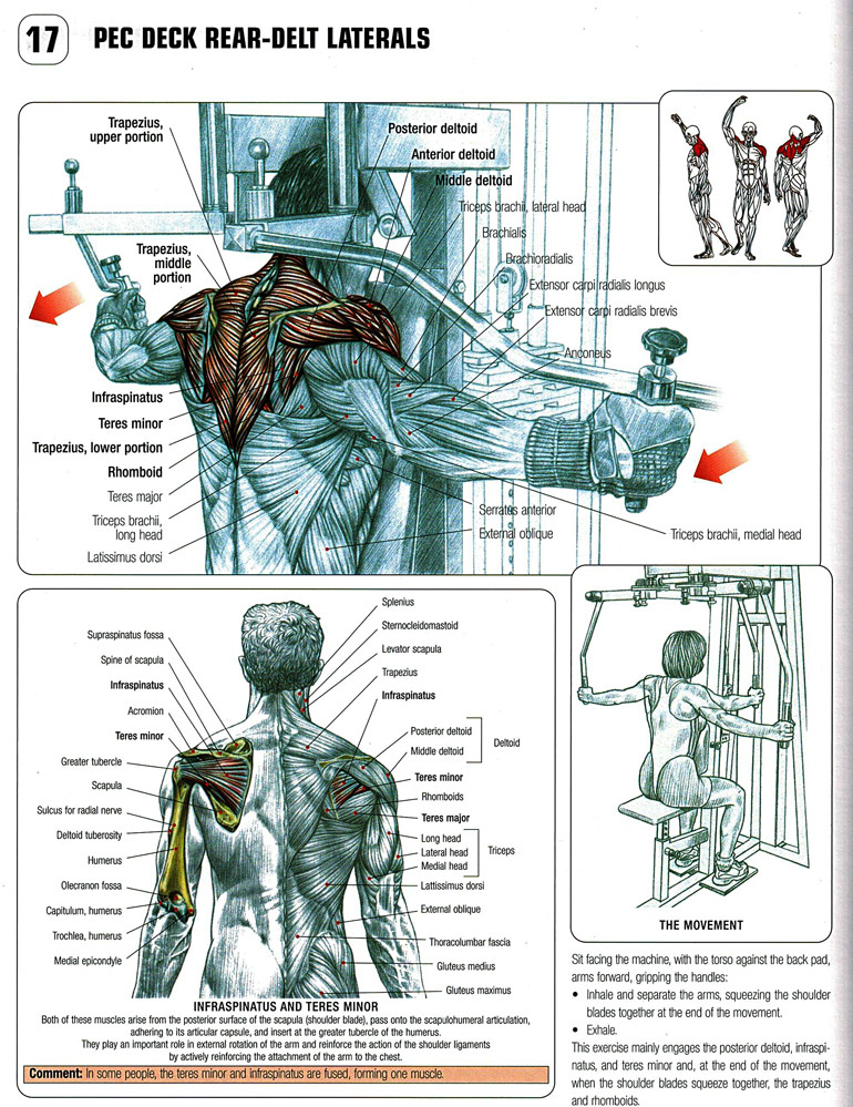 How to Pec Deck Rear Delt Flyes
