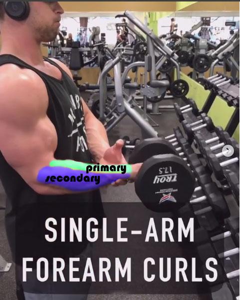 ☑️Single-Arm Forearm Curls