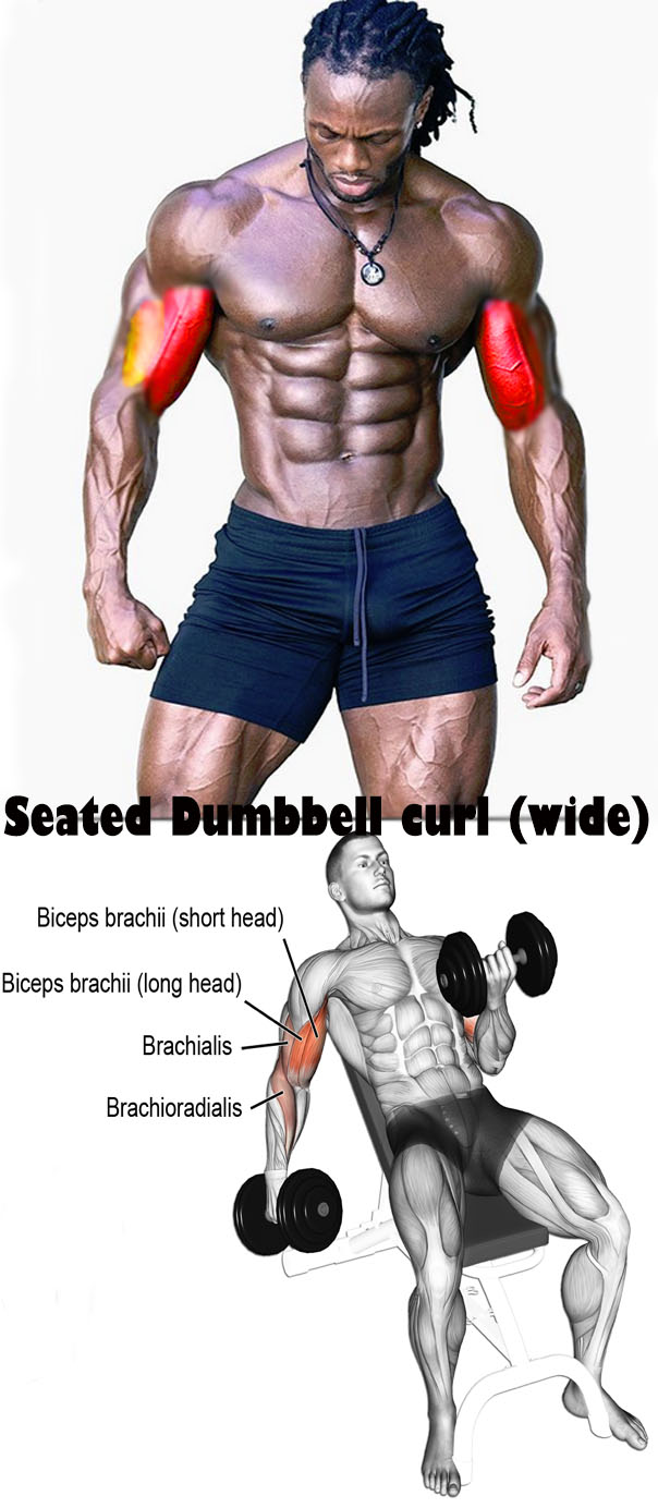 Seated Dumbbell curl (wide)