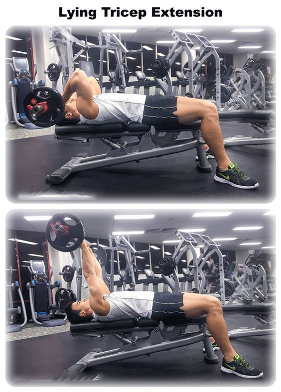 🔥Lying Triceps Extention