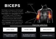 How to Biceps Workout
