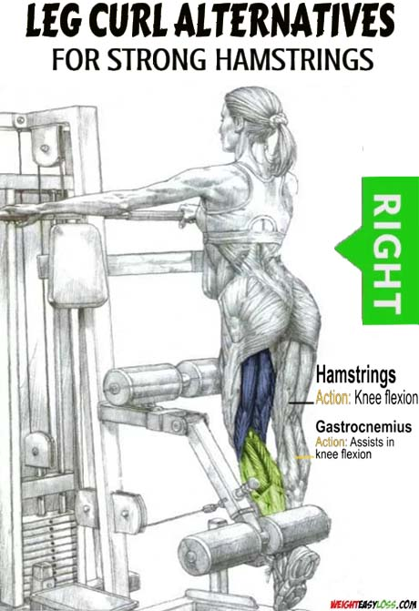 Technique of execution Single-Leg Standing Hamstring Curl