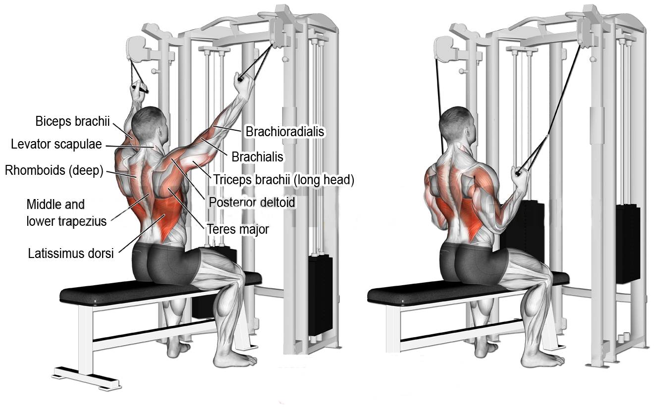 KNEELING CABLE LAT PULLDOWN