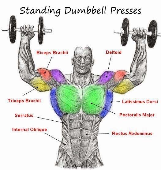 dumbbell presses