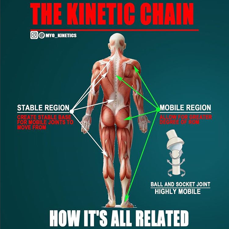 REGIONAL INTERDEPENDENCE | KINETIC CHAIN