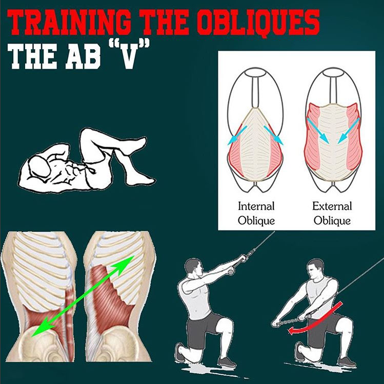 """TRAINING OBLIQUES AND THE AB """"V"""""""