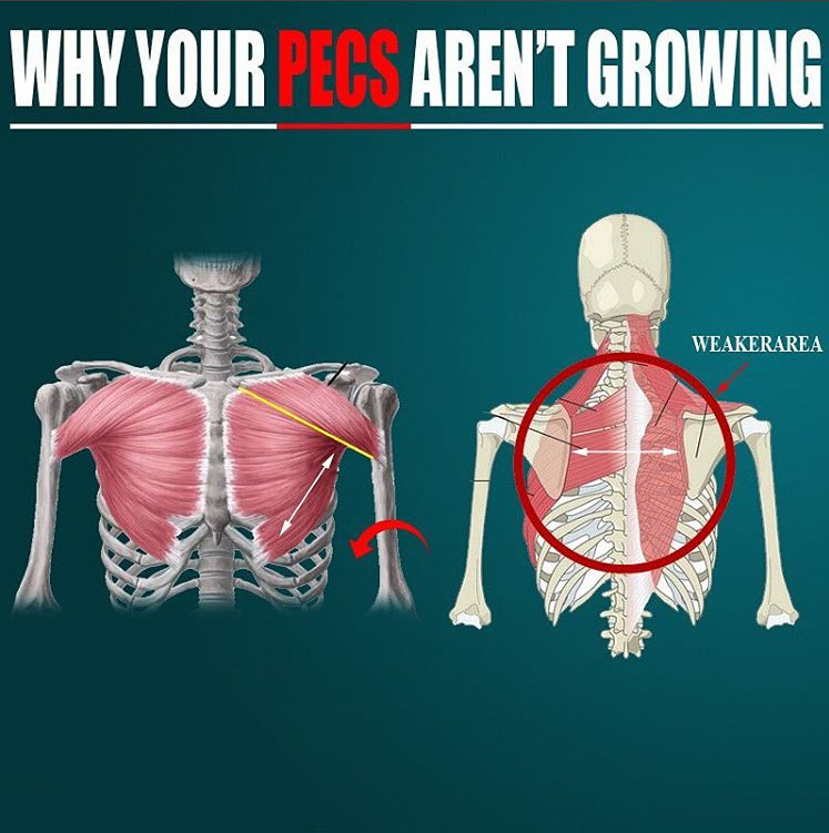WHY YOUR PECS AREN'T GROWING