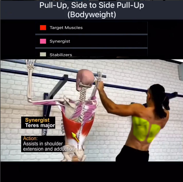 Pull-Up Side to Side Exercise