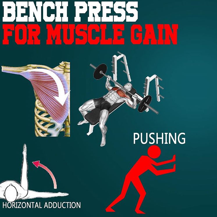 BENCH PRESS FOR MUSCLE GROWTH