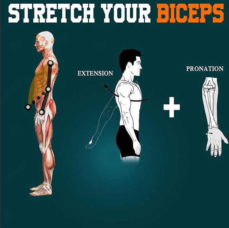 Stretch your biceps