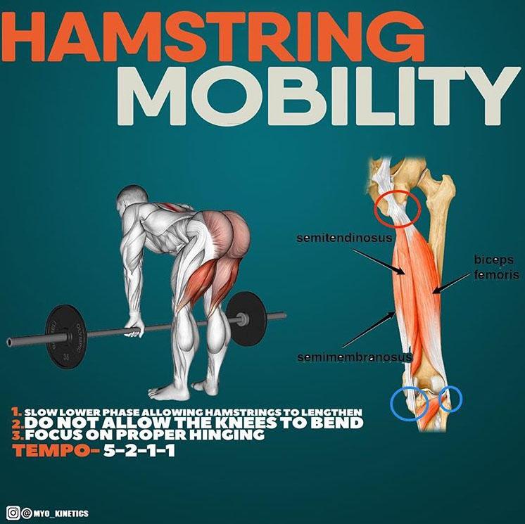 Hamstring mobility