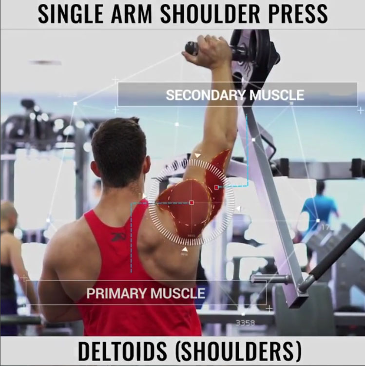 🔸Primary Muscle: Shoulders