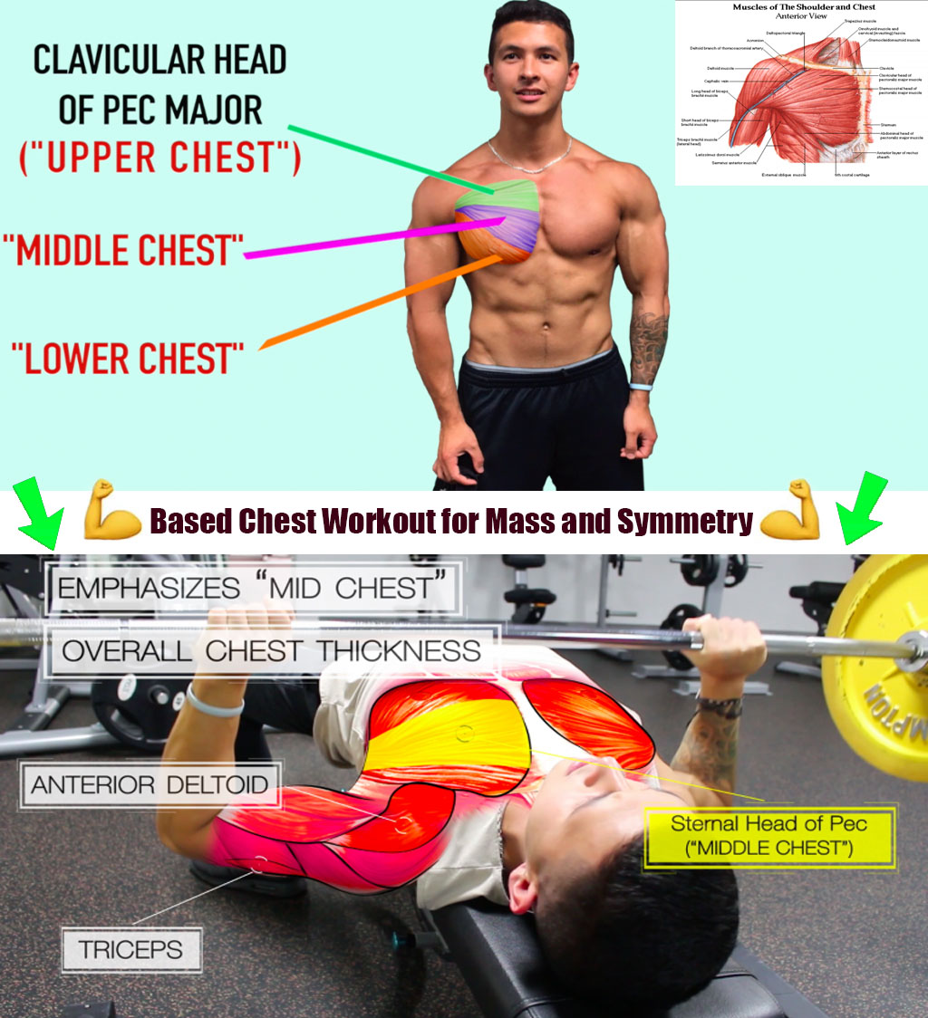 Based Chest Workout