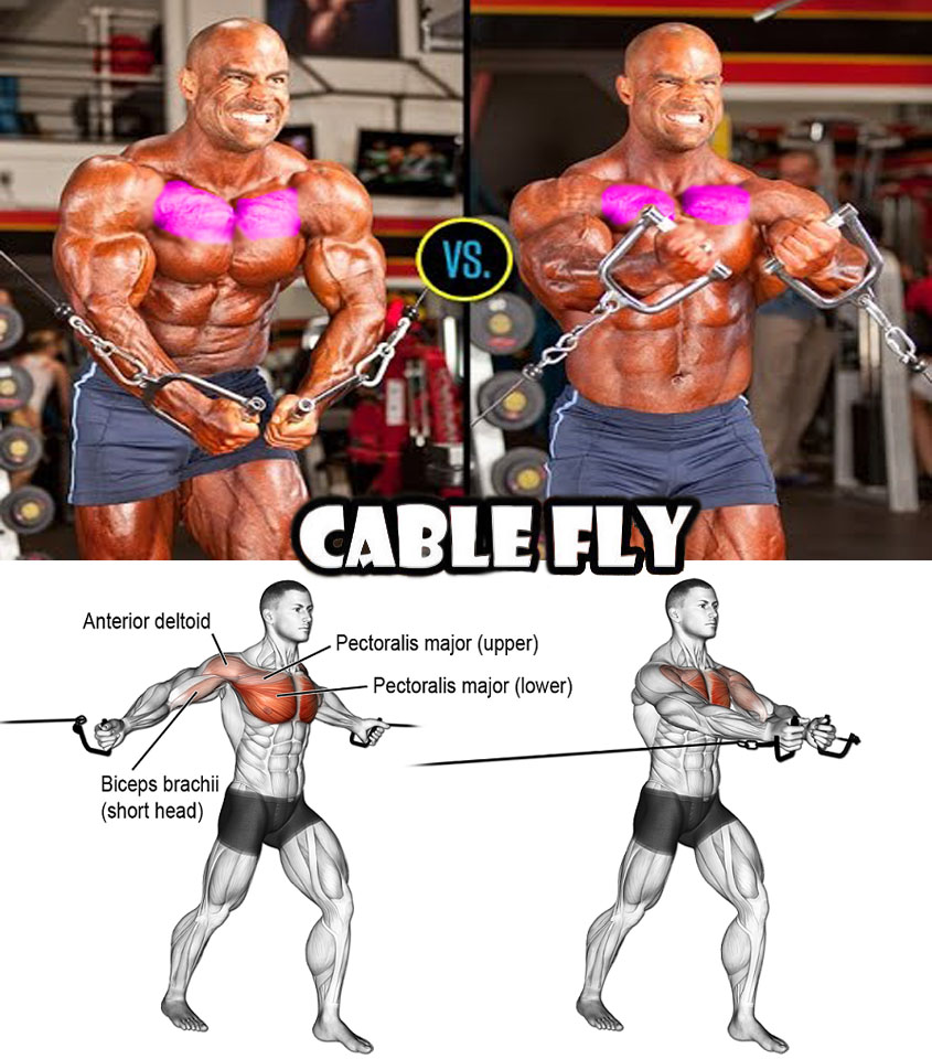 Cable Flys upper chest