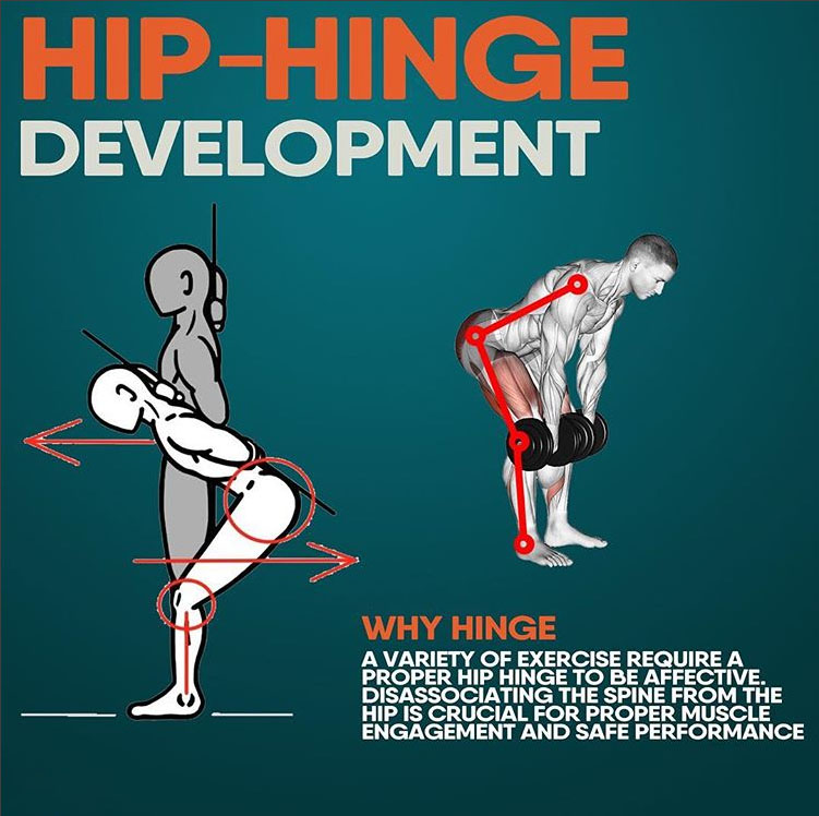 HIP-HINGE DEVELOPMENT