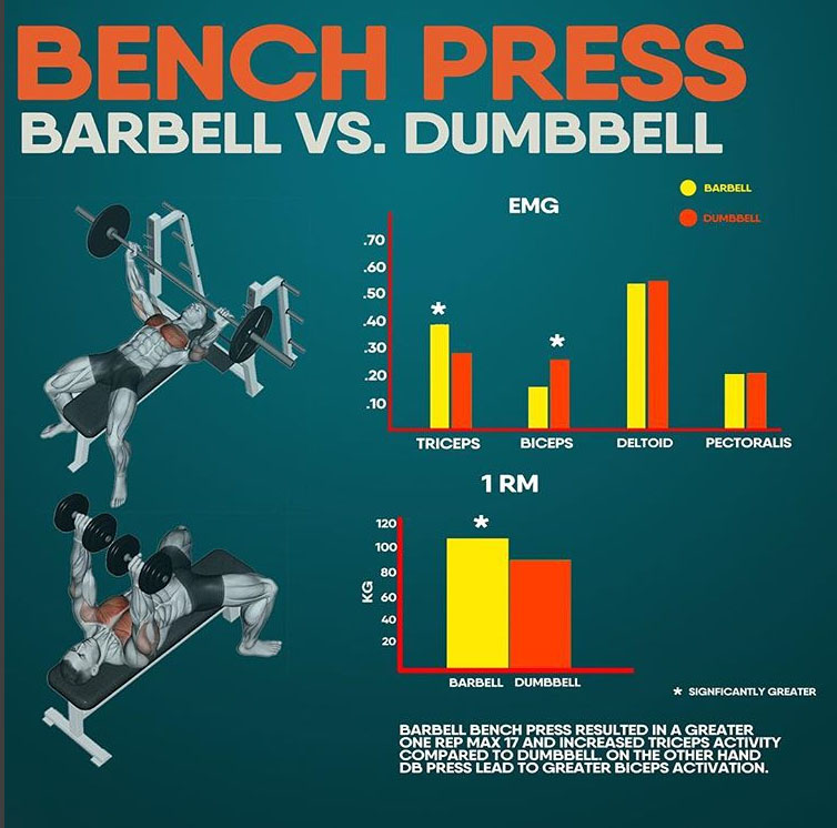 BENCH PRESS - BARBELL & DUMBBELL