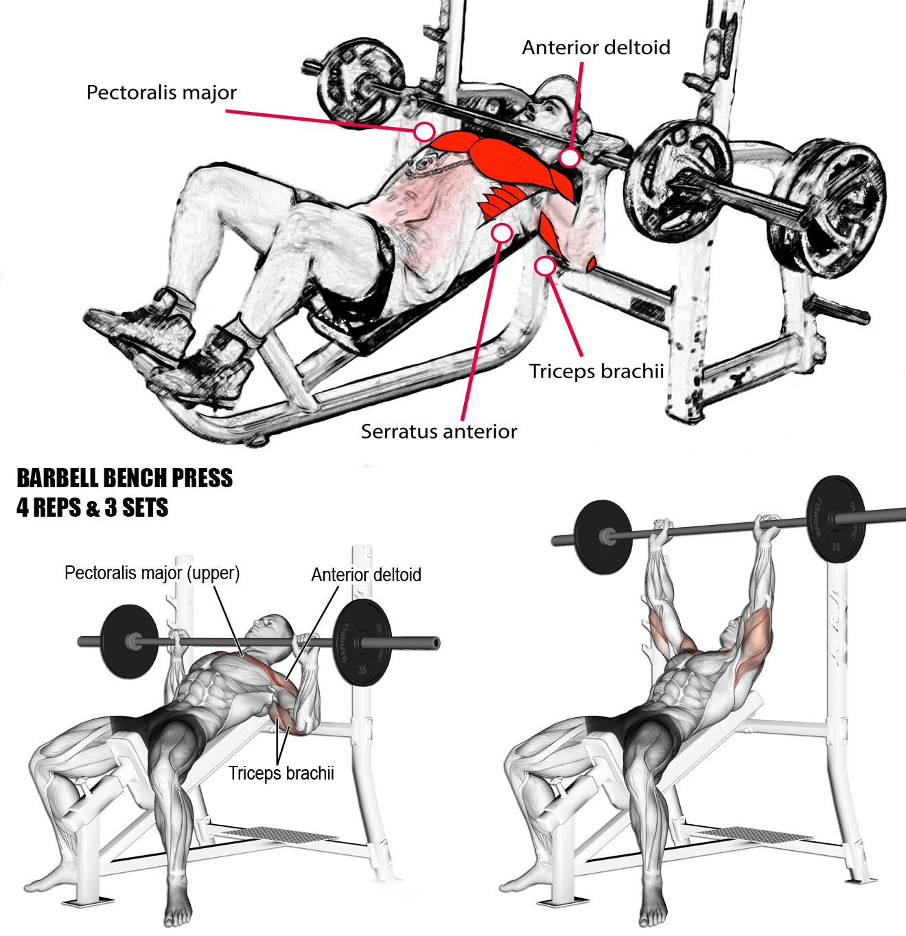 🔥BENCH PRESS - BARBELL
