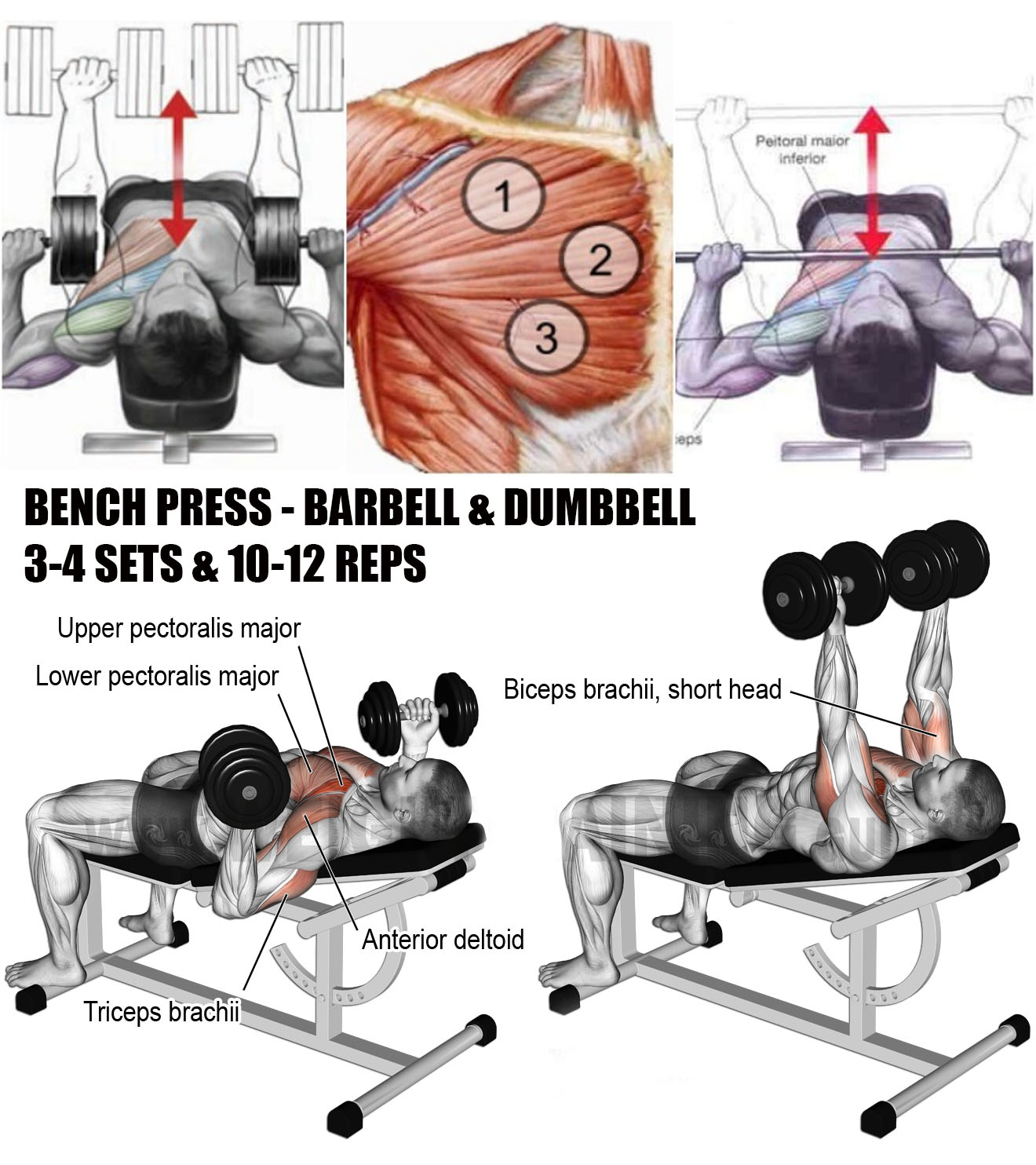 ✅BARBELL & DUMBBELL