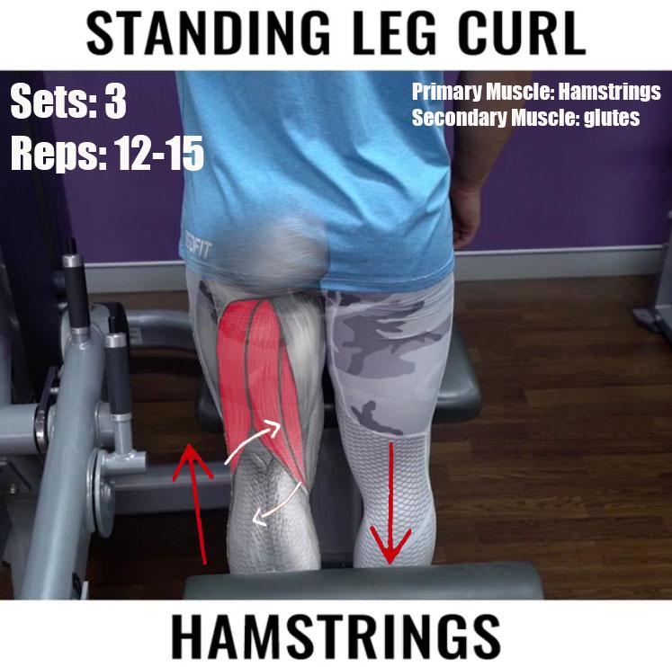 STANDING LEG CURL