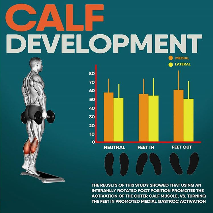 CALF DEVELOPMENT