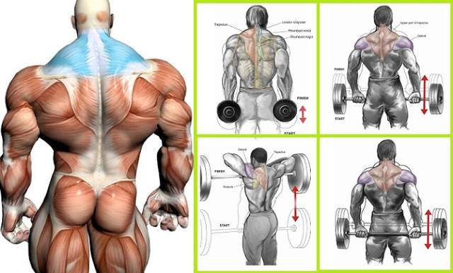 Shrugs and upright rows