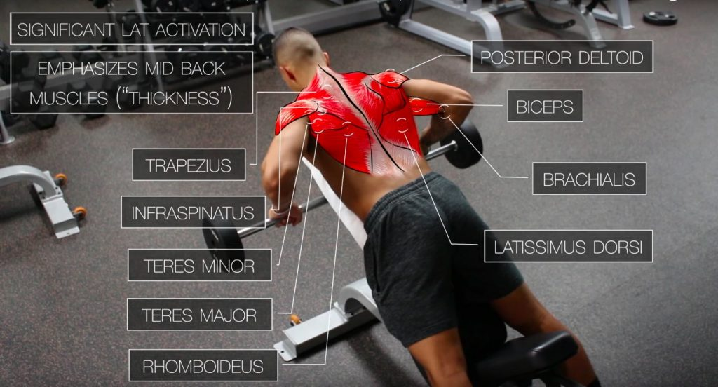 ✅Chest-Supported Rows