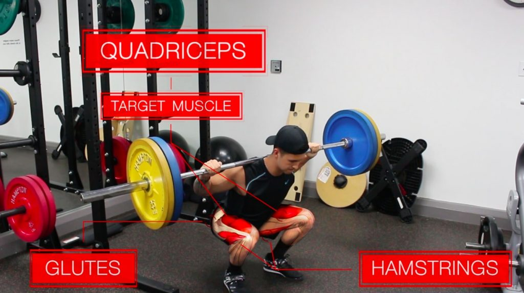 Barbell Back Squats (Quadriceps Emphasis)