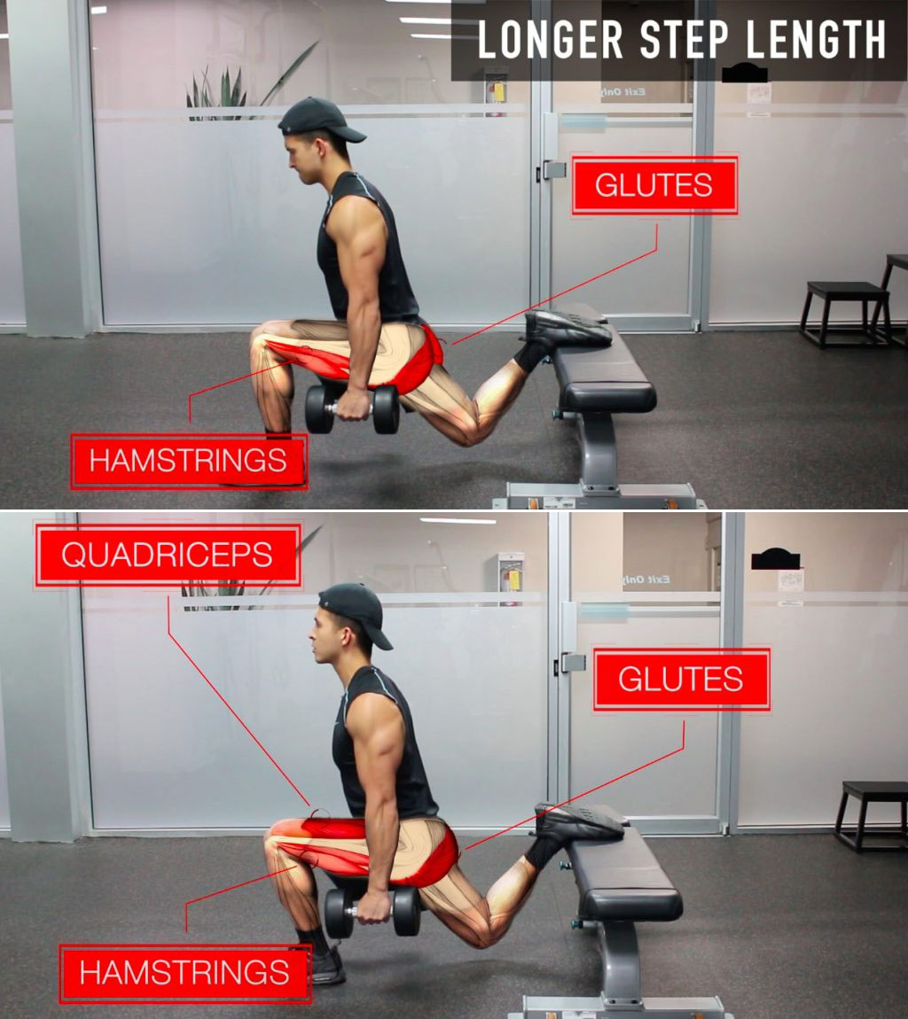 Bulgarian Split Squats (Quads/Hams/Glutes Emphasis)