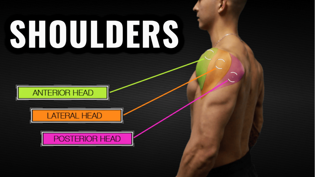 Based Shoulder Workout for Mass and Symmetry