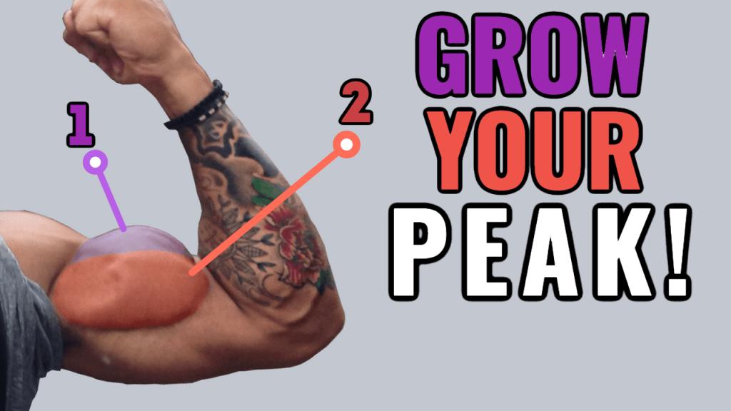 ✅Bicep Peak Workout