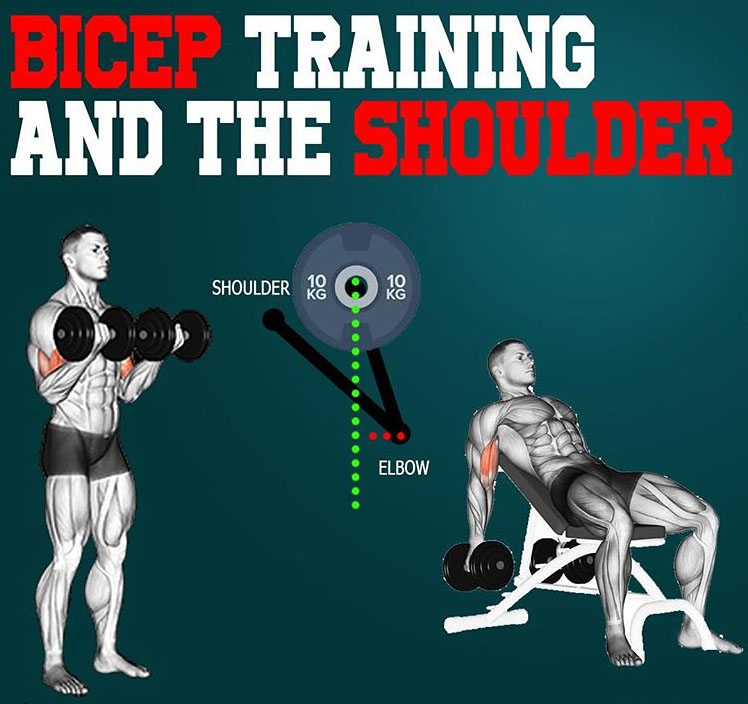 shoulders during a bicep curl
