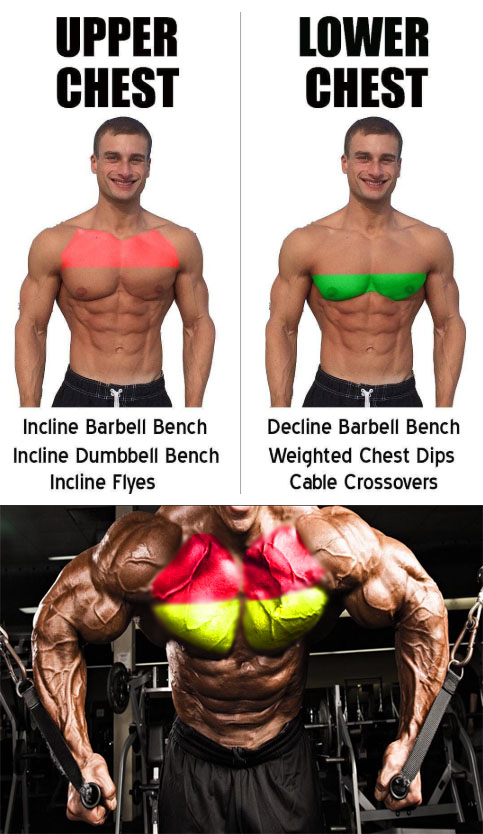 Cable Flyes Lower Chest