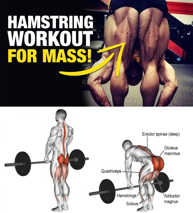 Strengthen Your Hamstrings