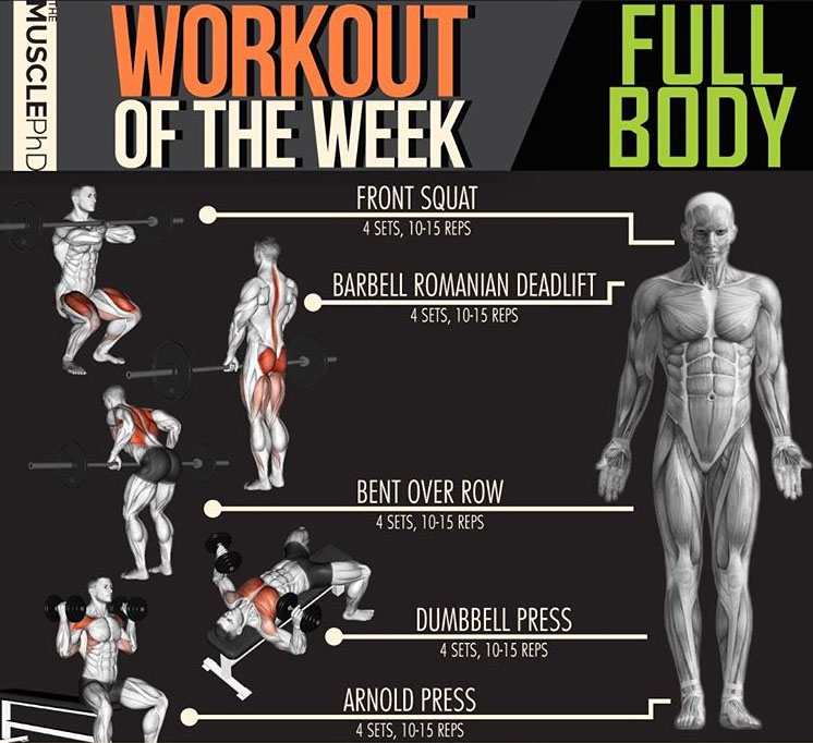 FULL BODY WORKOUT ON WEEK