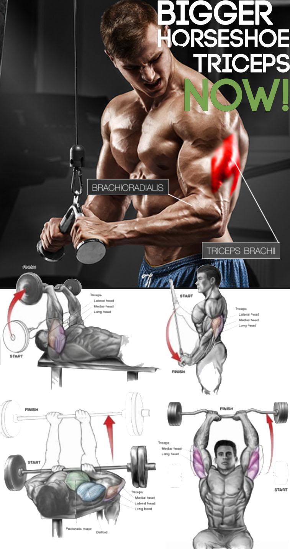 Triceps Split
