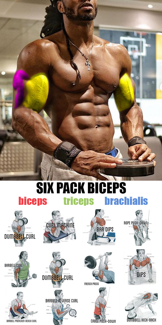 Six Pack Bicpes Exercises