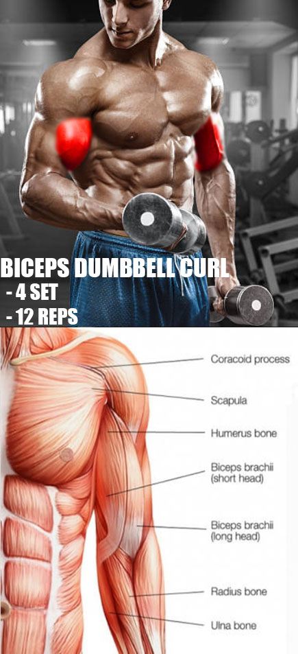 BICEPS DUMBBELL CURL