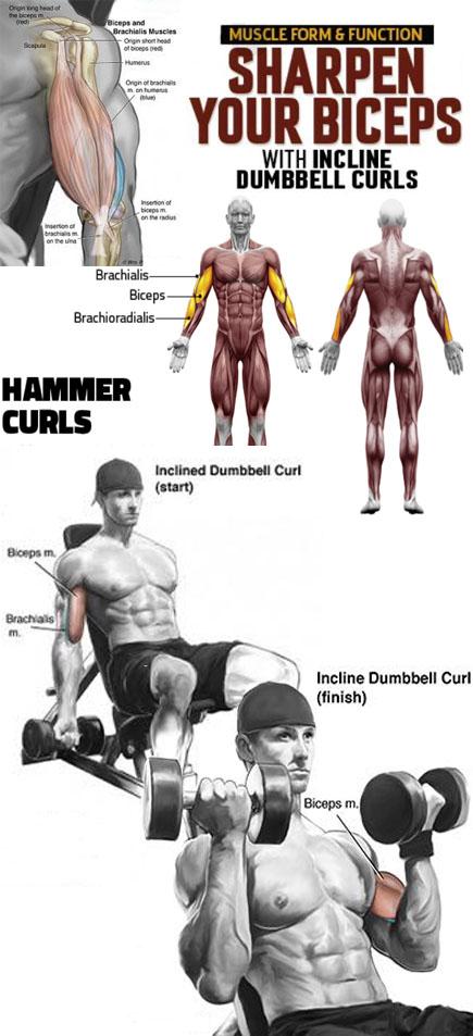 Hummer Curls