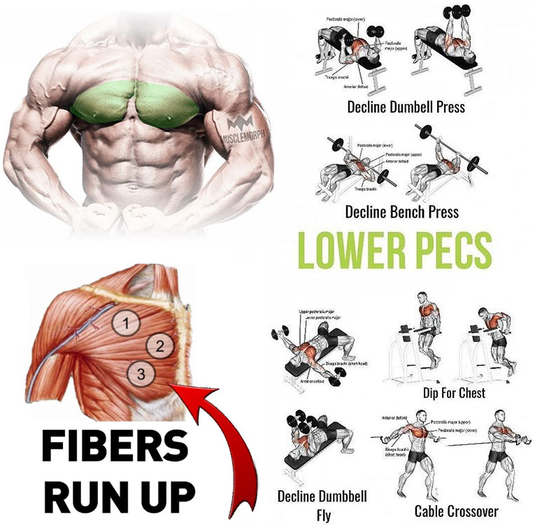LOWER PECS EXERCISES