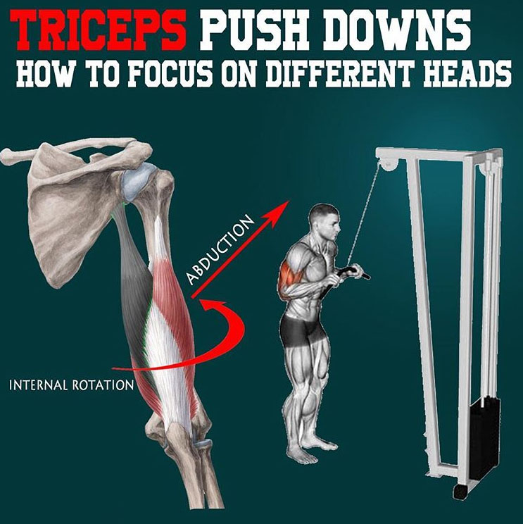TRICEPS PUSH DOWNS